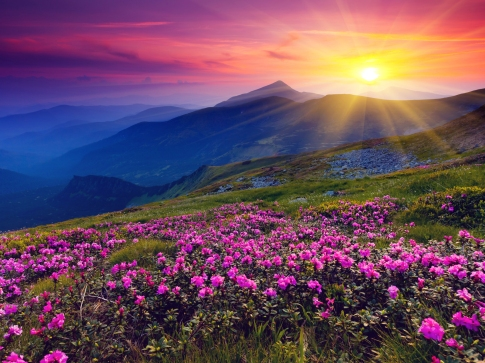 meadows-purple-wild-flowers-mountains-and-sunset-hd-wallpaper-naturewallbase-blogspot-com